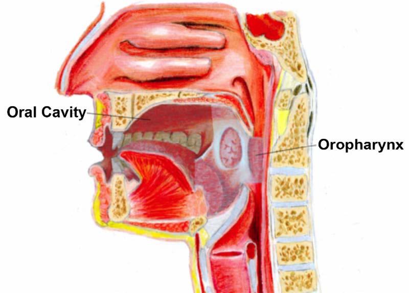 hpv throat tumor warts on older skin