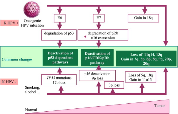 hpv associated with head and neck cancer