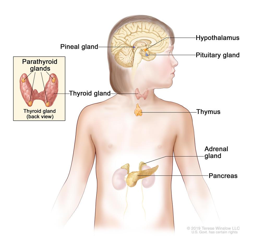 is cancer genetic only cancerul colului uterin simptome
