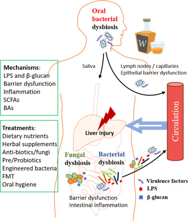 Dysbioosi