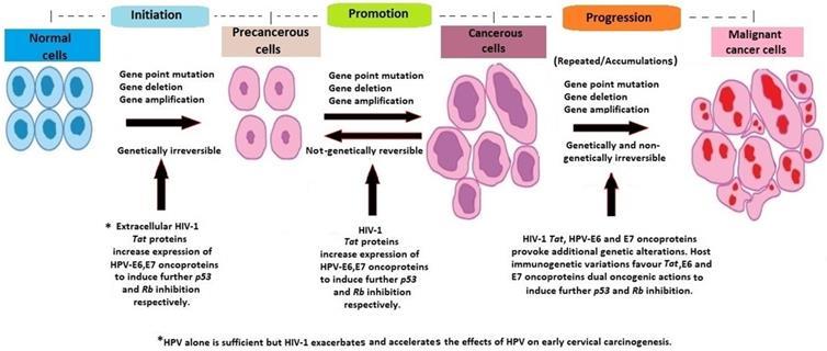 soigner papillomavirus par les plantes hpv impfung im alter