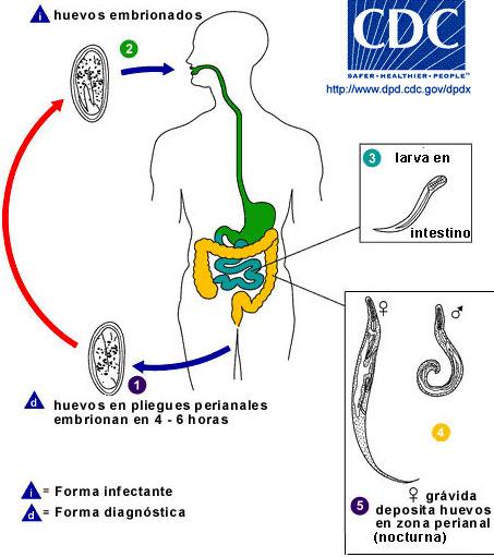 bacterii din spitale cancerul cerebral
