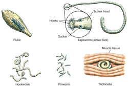 biodescodificacion cancer de prostata
