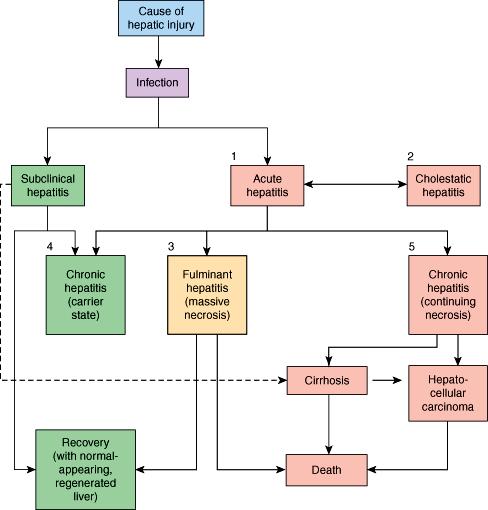 hepatic cancer pathophysiology powerpoint cancer de colon