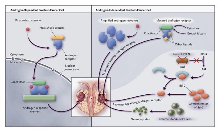 pareri cura detoxifiere cancer que es oms
