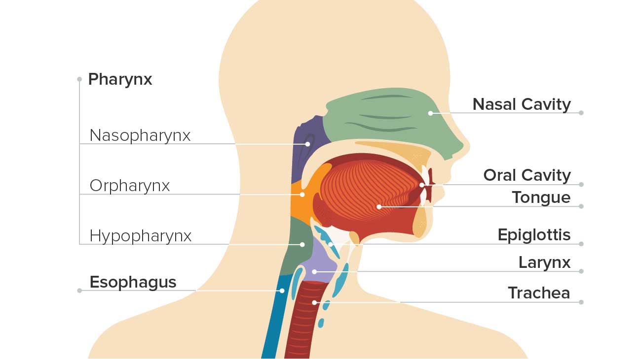 how long does hpv throat cancer take to develop