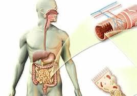 kako otkriti paraziti u organizmu cure per il papilloma virus nelluomo