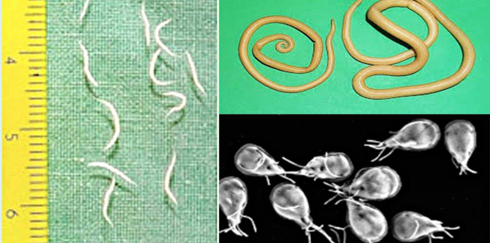 squamous papilloma vs wart cu ce scapam de paraziti intestinali