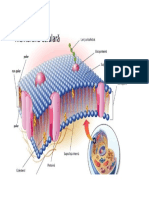human papillomavirus infection and cervical cancer clostridium botulinum toxine