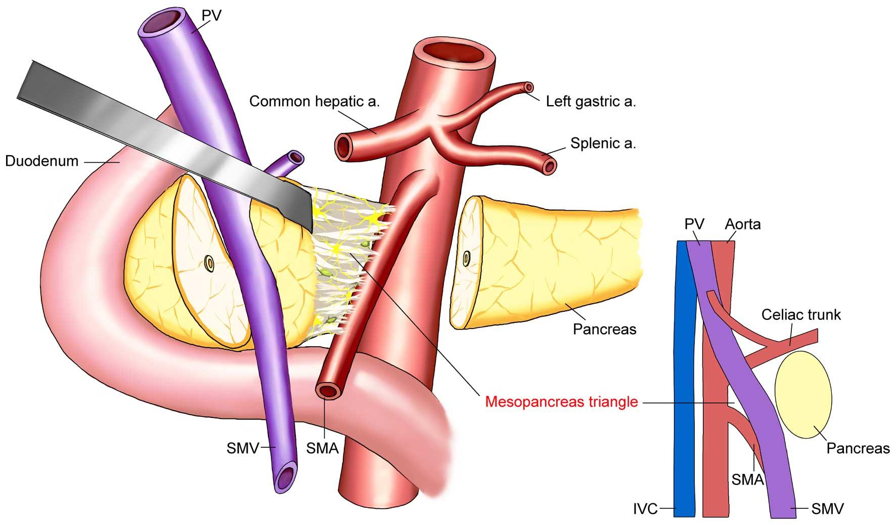 virus del papiloma humano y verrugas plantares