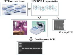 papilloma hpv pcr papillomavirus traduction anglais