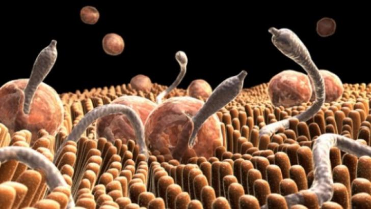 parazi?i intestinali simptome hpv virus pap smear