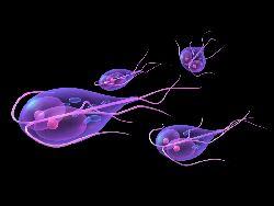 paraziti intestinali de culoare neagra