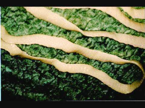 detoxifiere cu clean 9 parazitii rsr