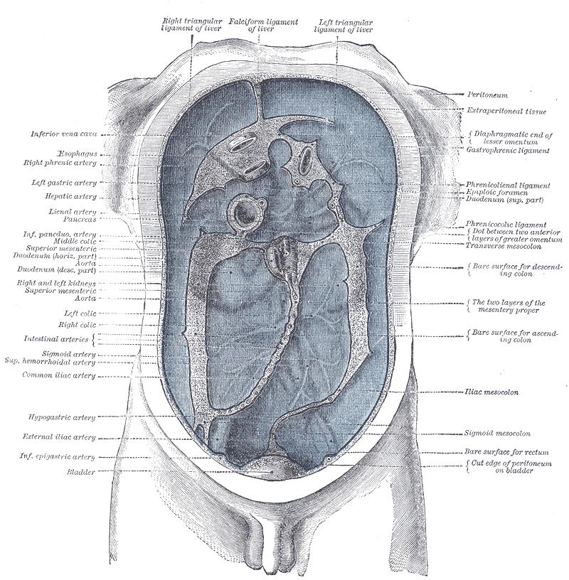 virus papiloma humano cancer de ovario hpv cancer cabeca e pescoco
