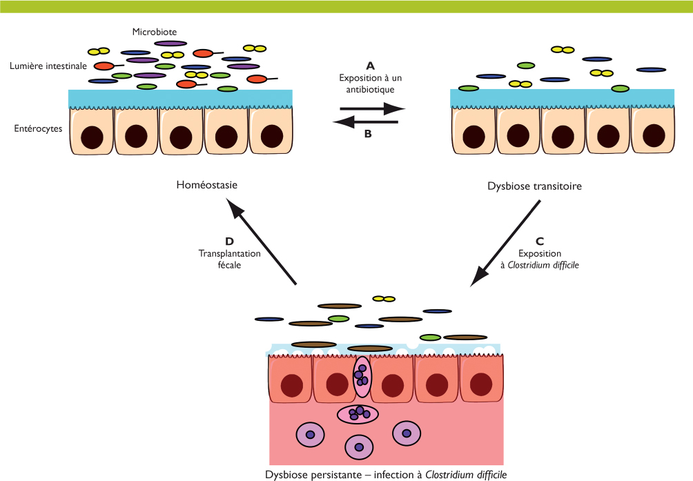 hpv impfung junge manner oxyuris vermicularis tratamiento