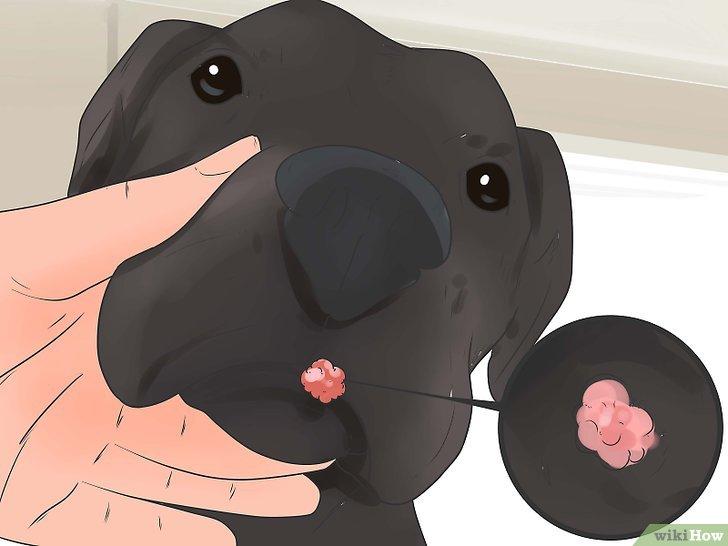 virus del papiloma a perros cancerul nu este roz