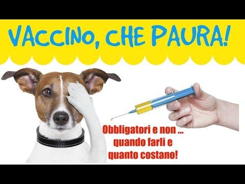human papillomavirus in penile malignant tumors