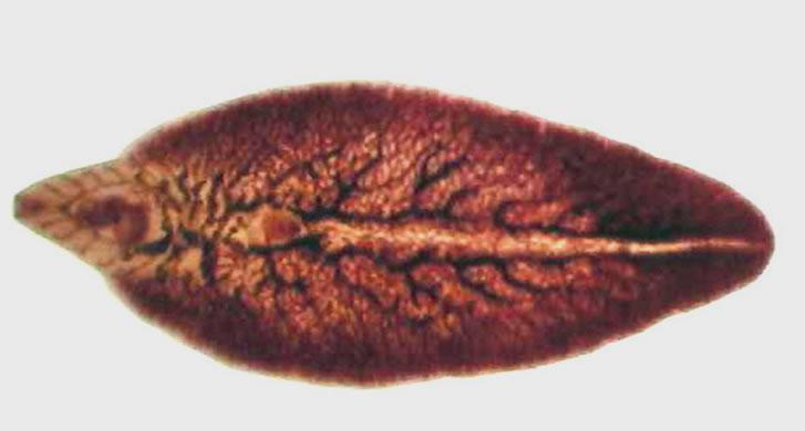 doare cancerul de col uterin cancer aggressive scale