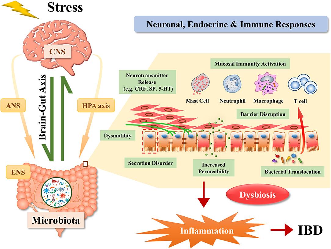 dysbiosis healing time