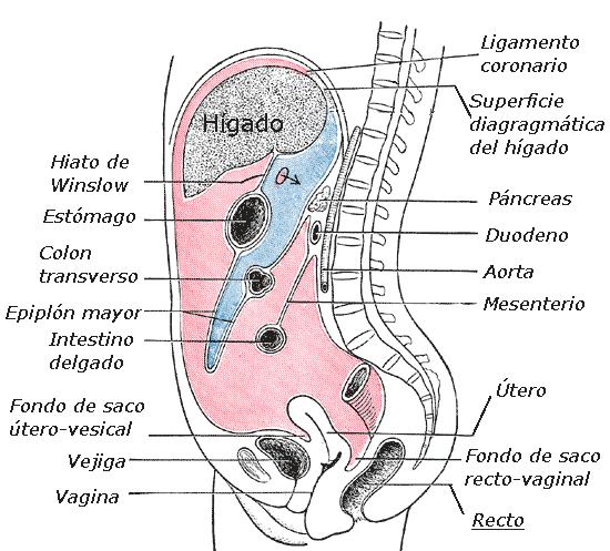 cancer de colon y estrenimiento cancer de utero endometrial