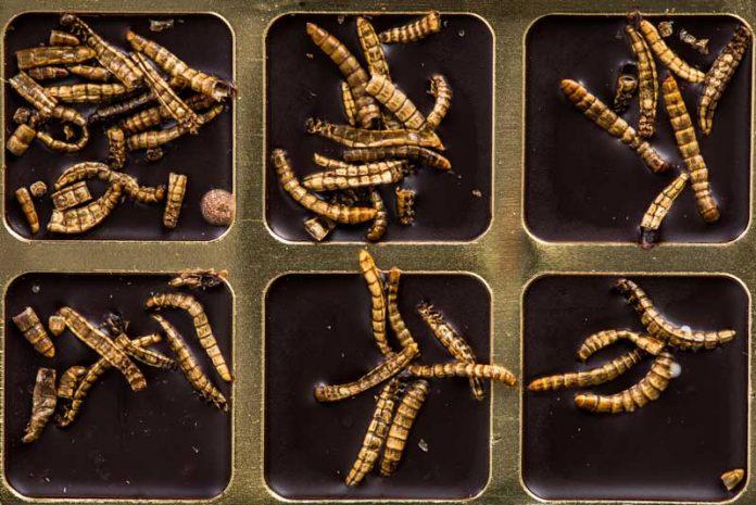 paraziti intestinali om from condyloma acuminata