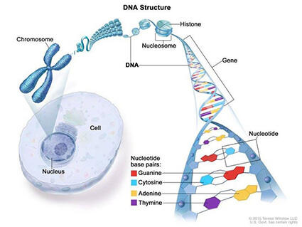 is cancer genetic only tratament usturime in gat