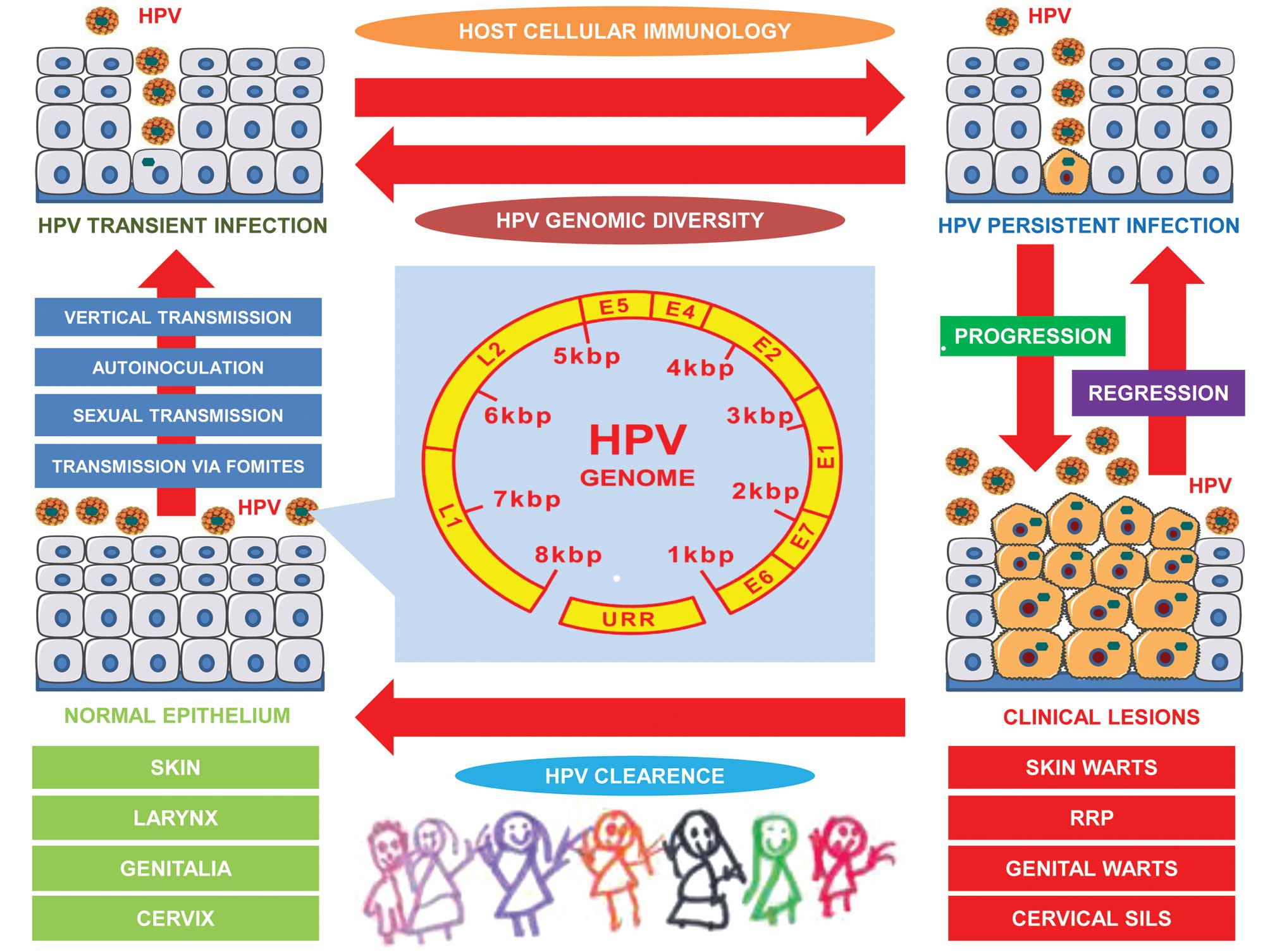 hpv and throat problems