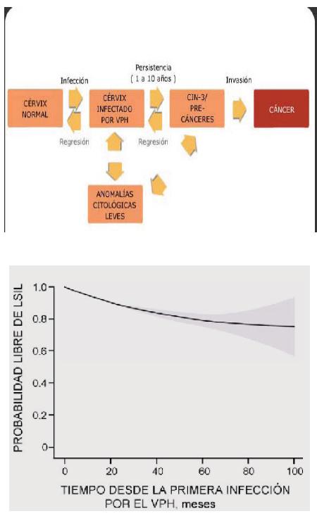 papiloma humano contagio por ropa familial cancer heritability