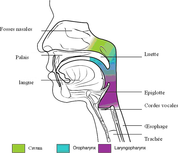 cancer colorectal septin 9
