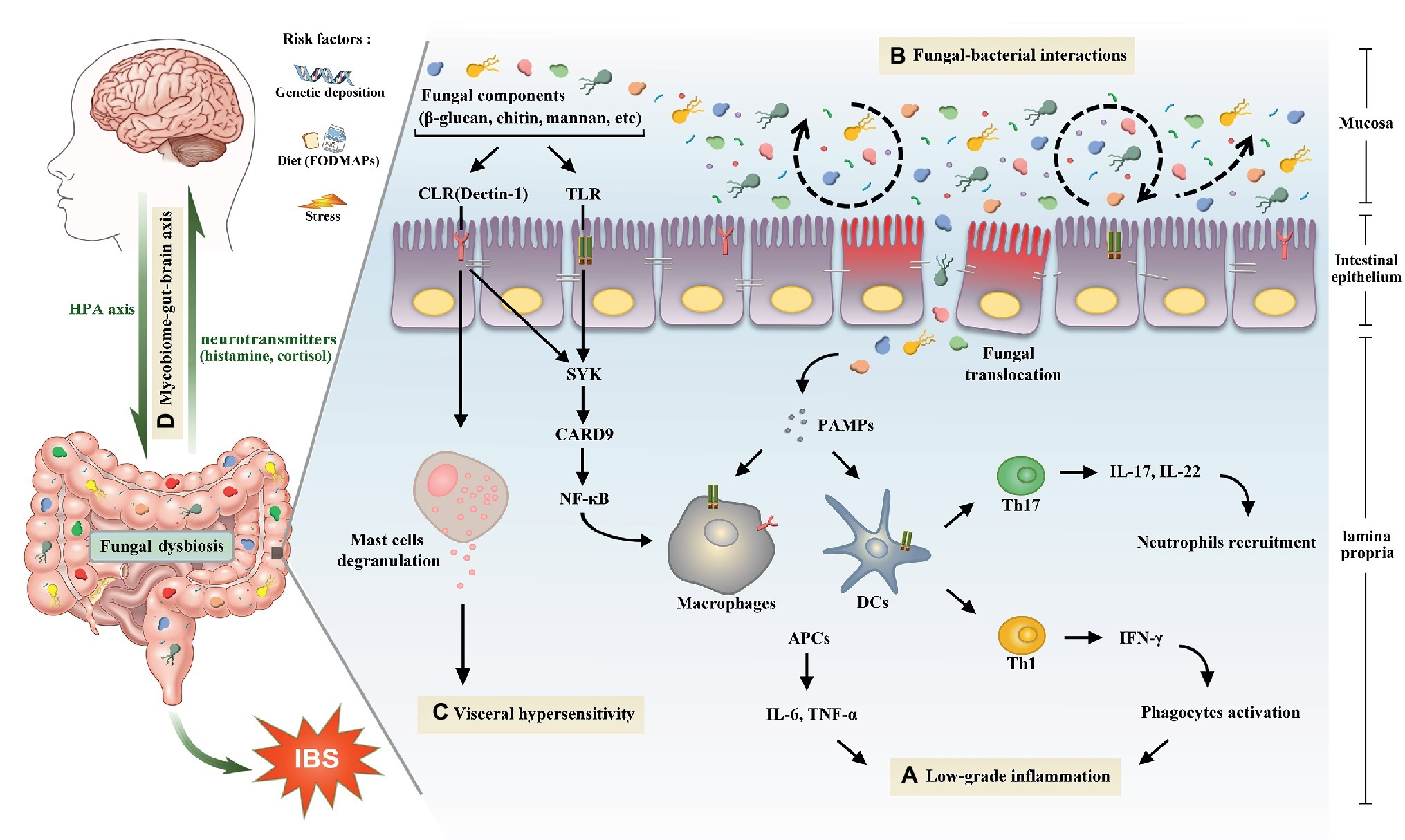 gut dysbiosis yeast infection