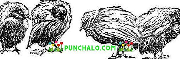 tracheal tumors papilloma hpv et contagion