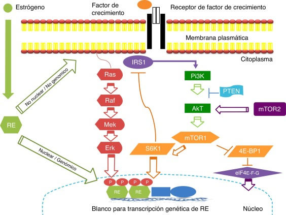 is hpv virus cancer detoxifiere colon pe cale naturala
