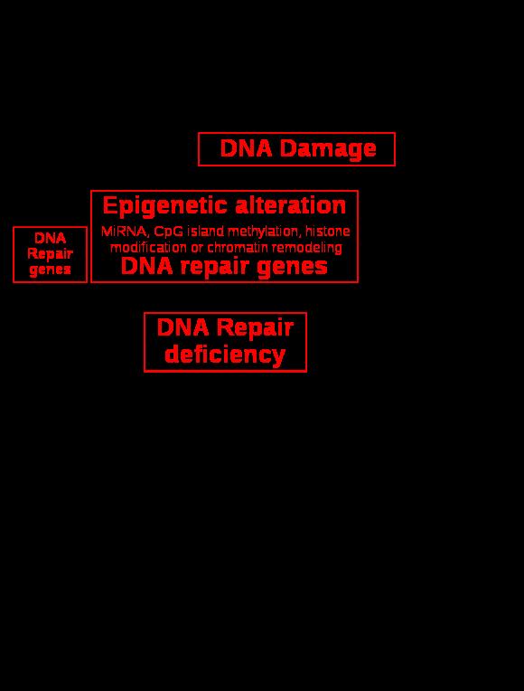 how long does hpv throat cancer take to develop regim de detoxifiere