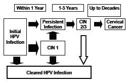 papillomavirus vaccine history