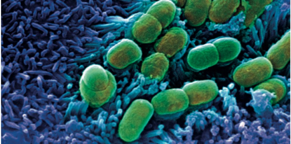 bacterie qui ronge les os enterobiasis que causa