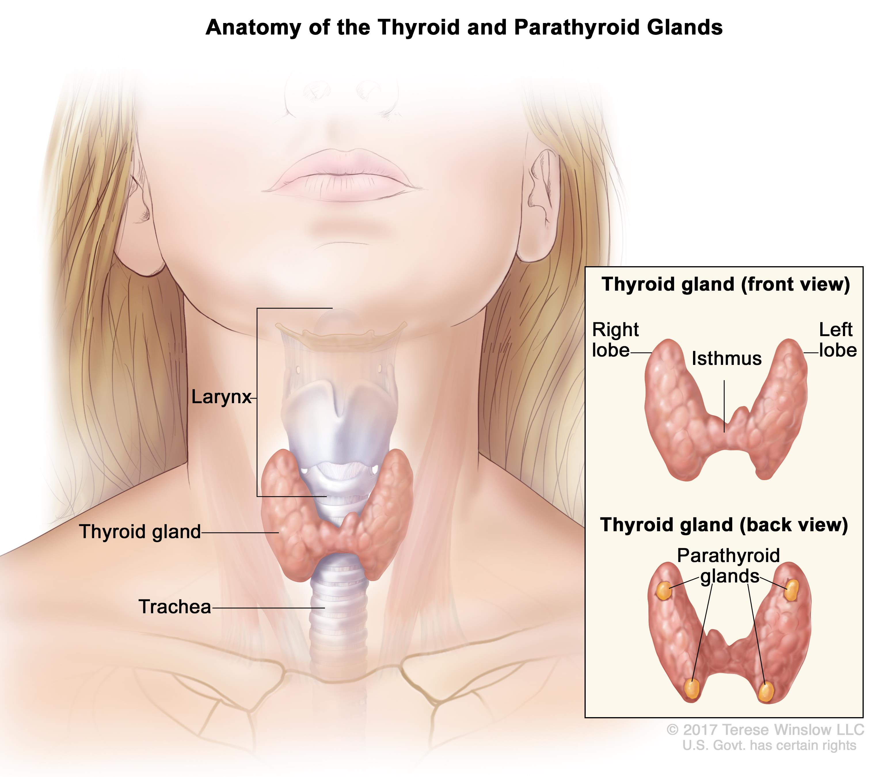laryngeal papillomatosis medscape genital hpv infection symptoms in females