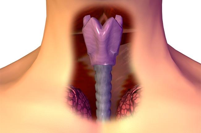 tratamiento para oxiuros para ninos diagnosi papilloma virus nelluomo