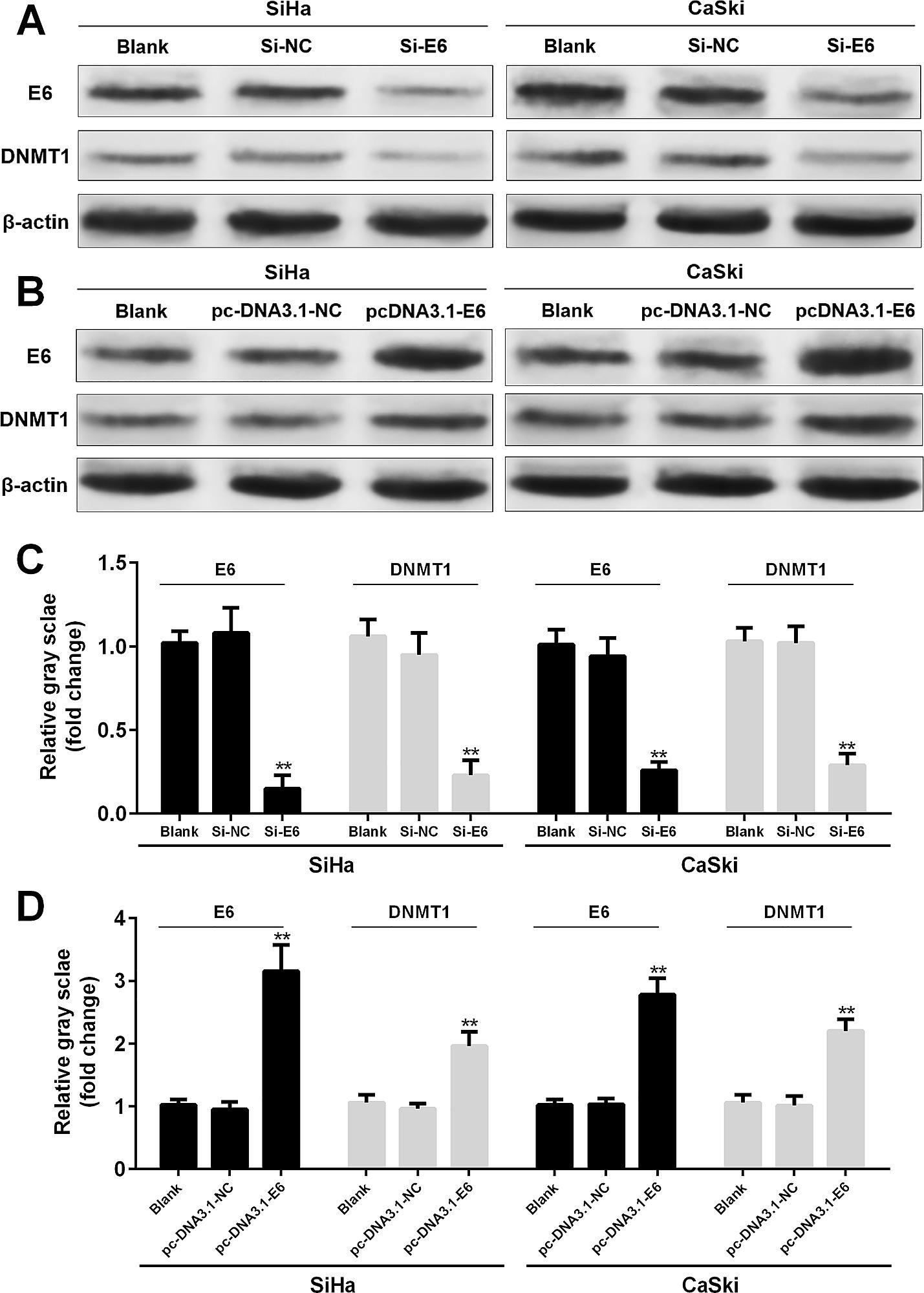 thea 2 toxin papilomatosis bovina virus