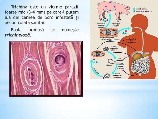 paraziti in tot corpul parazitii - hash thug rezist