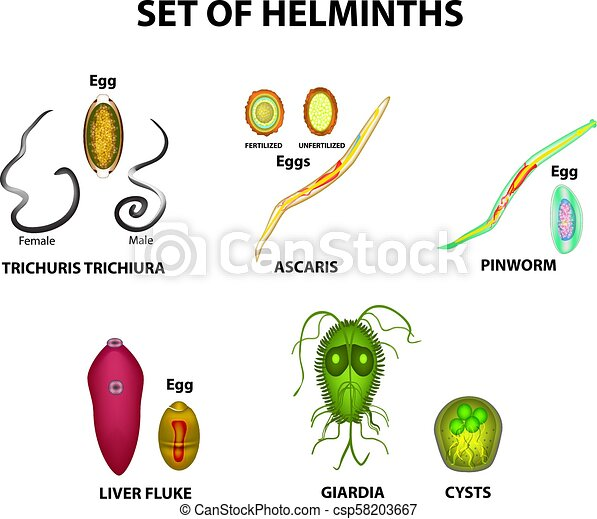worms trematode paraziti rozatoare