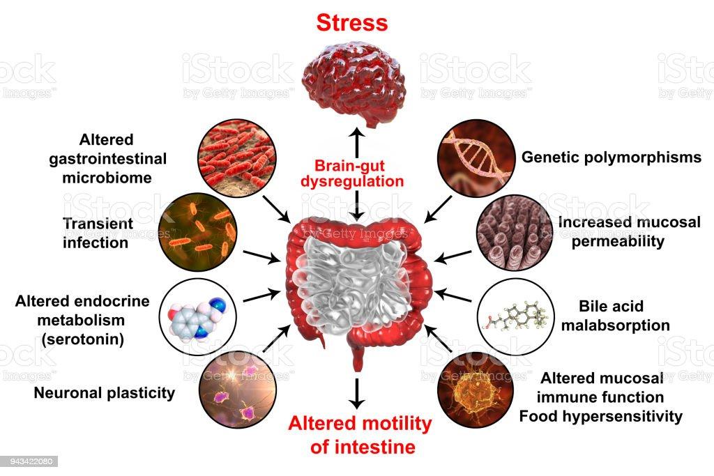 kombucha dysbiosis tempo incubazione papilloma virus uomo