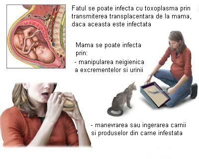 toxoplasmoza in sarcina simptome hpv throat lesions