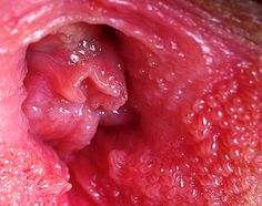 hpv y cancer de prostata cancer la esofag cauze