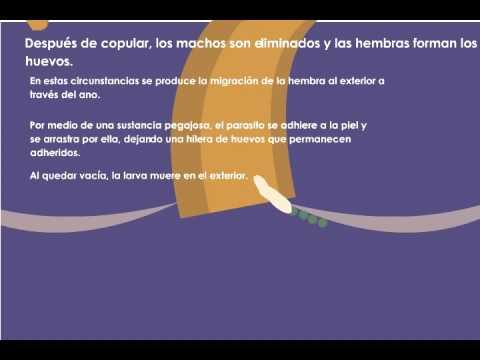 virus del papiloma humano en mujeres mexicanas