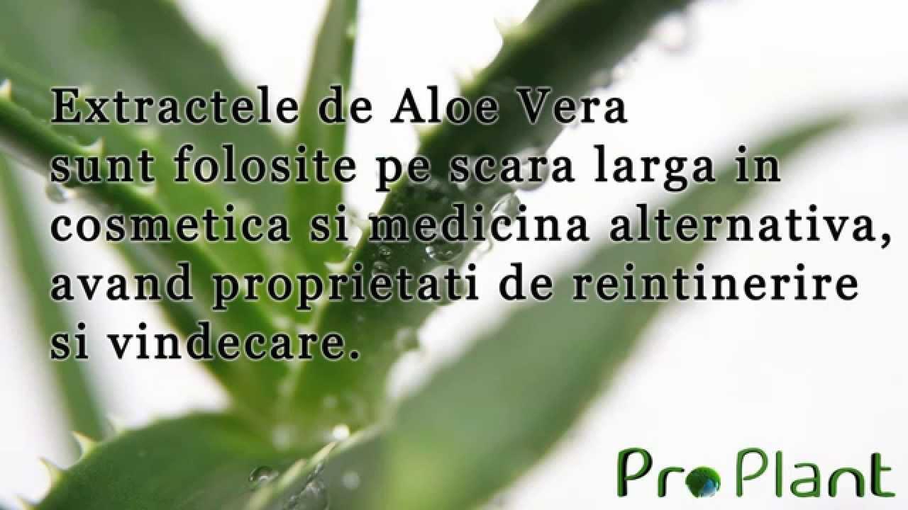 detoxifiere mit virus del papiloma humano verrugas tratamiento