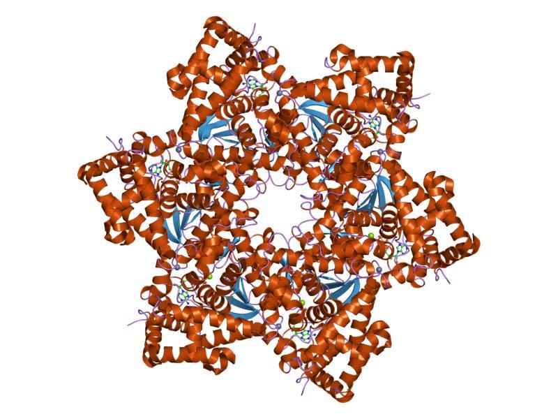 virus del papiloma humano 31 y 33