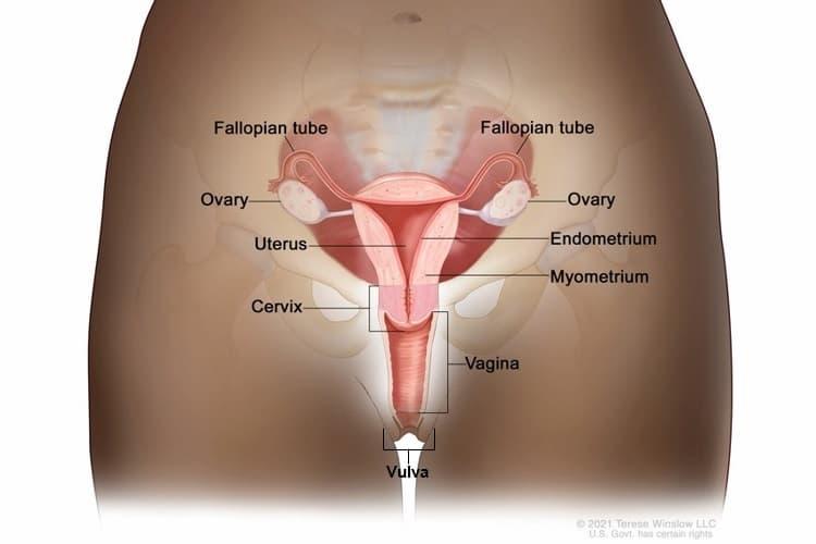 oxiuros sintomas e tratamento papillary thyroid cancer lymph node dissection