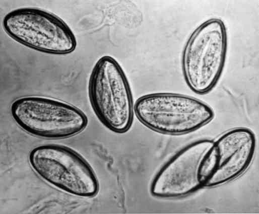 sintomi papilloma virus femminile