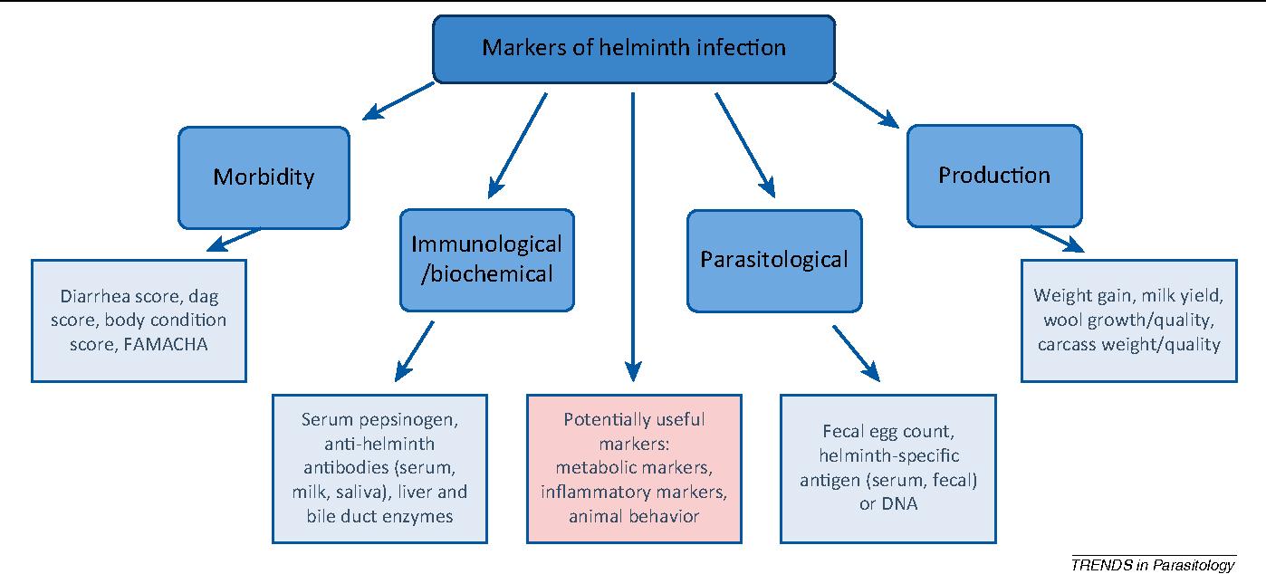 helminth infection diagnosis
